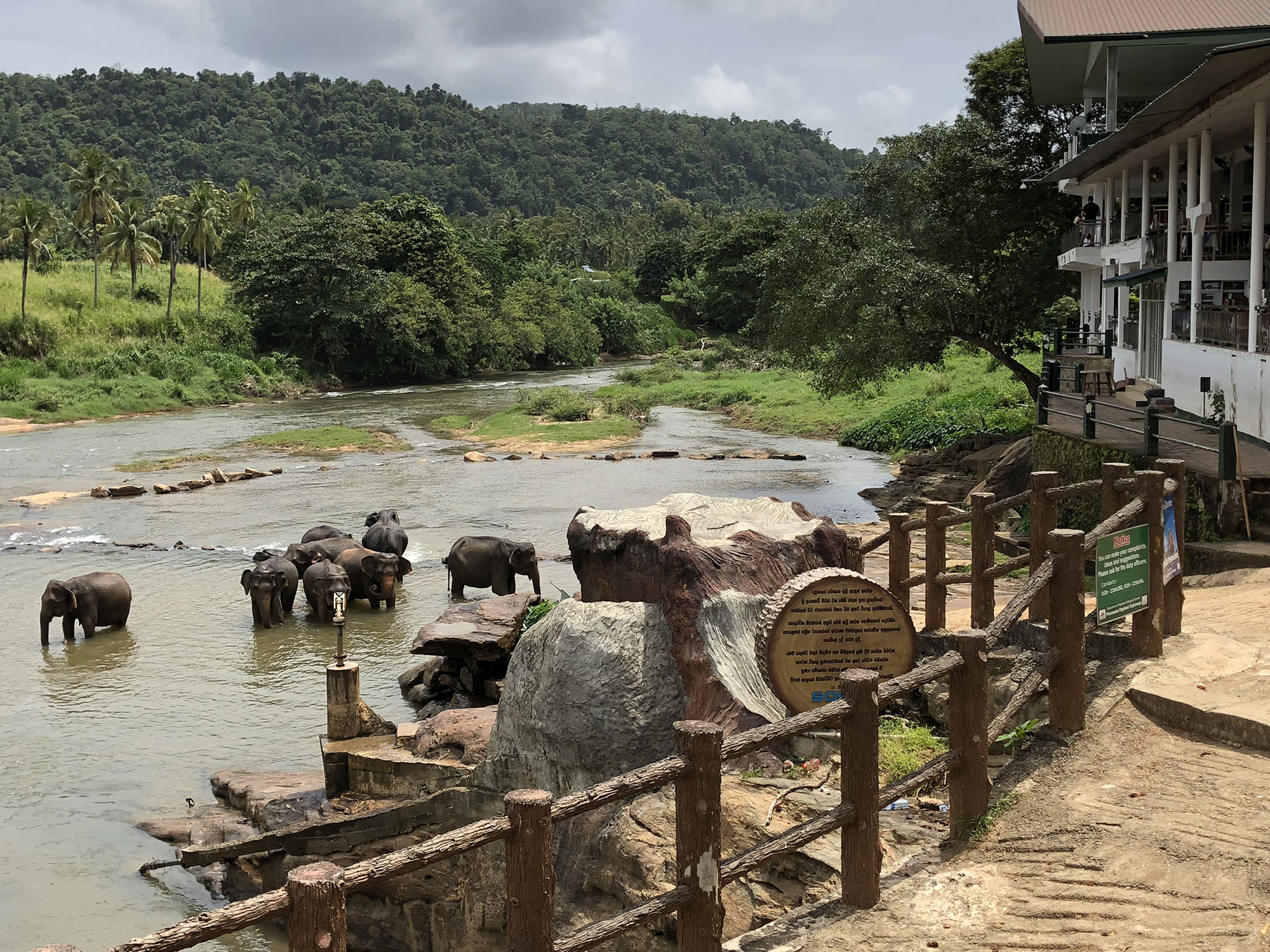 centre-yoga-om-shanthi-sri-lanka-elephants